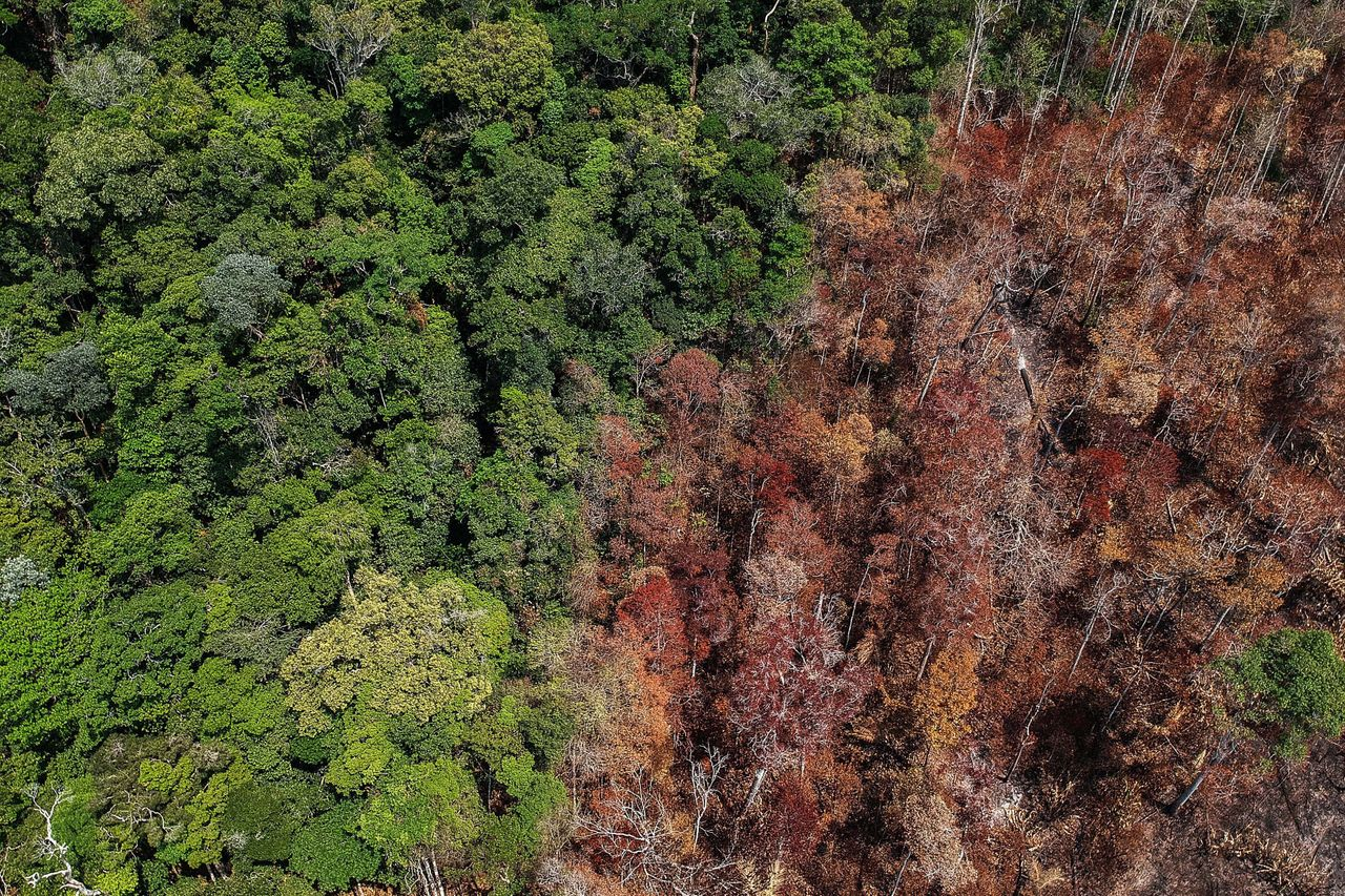 Aerial view of burned areas near Moraes Almeida, a town along a section of the Trans-Amazonian Highway...